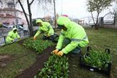 Bağcılar'da 1 Milyon 93 Bin Mevsimlik Çiçek Dikildi