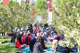 Bağcılarlı Çocuklar Kiraz Çiçeği Festivali'nde Bolca Eğlendi