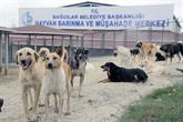 Bağcılar'da Sokak Hayvanları Soğuk Buharla Serinletiliyor