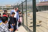 Bağcılar'da 268 Sokak Hayvanı Sahiplendirildi