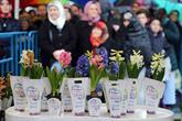 Dünya Kadınlar Günü'nde 25 Bin Sümbül Dağıtıldı