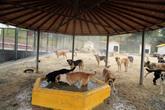 Eyyam-ı Bahur Sıcaklarına Karşı Sokak Hayvanları Buharla Serinletiliyor
