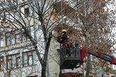 Bağcılar'da ağaçlara kış bakımı yapılıyor